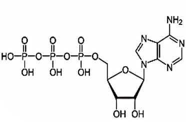 アデノシン三リン酸(ATP)